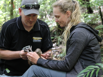 An update on the kohanga kiwi project